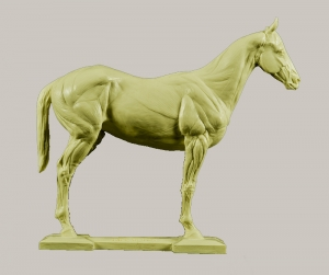 3d Horse Anatomy Model
